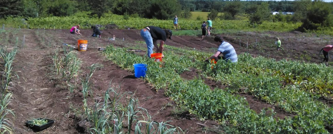 Brunswick High School Farm Project